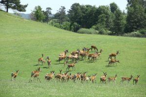Safari Okrągłe